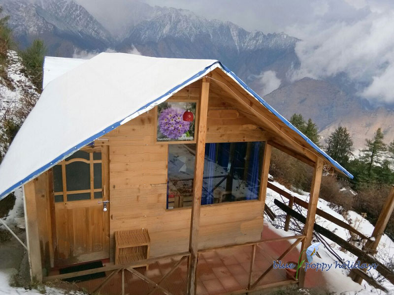 Blue Poppy Resorts Auli - Individual Huts