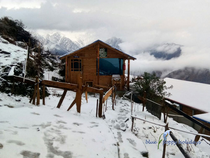 View from the Resort Blue Poppy Resorts Auli